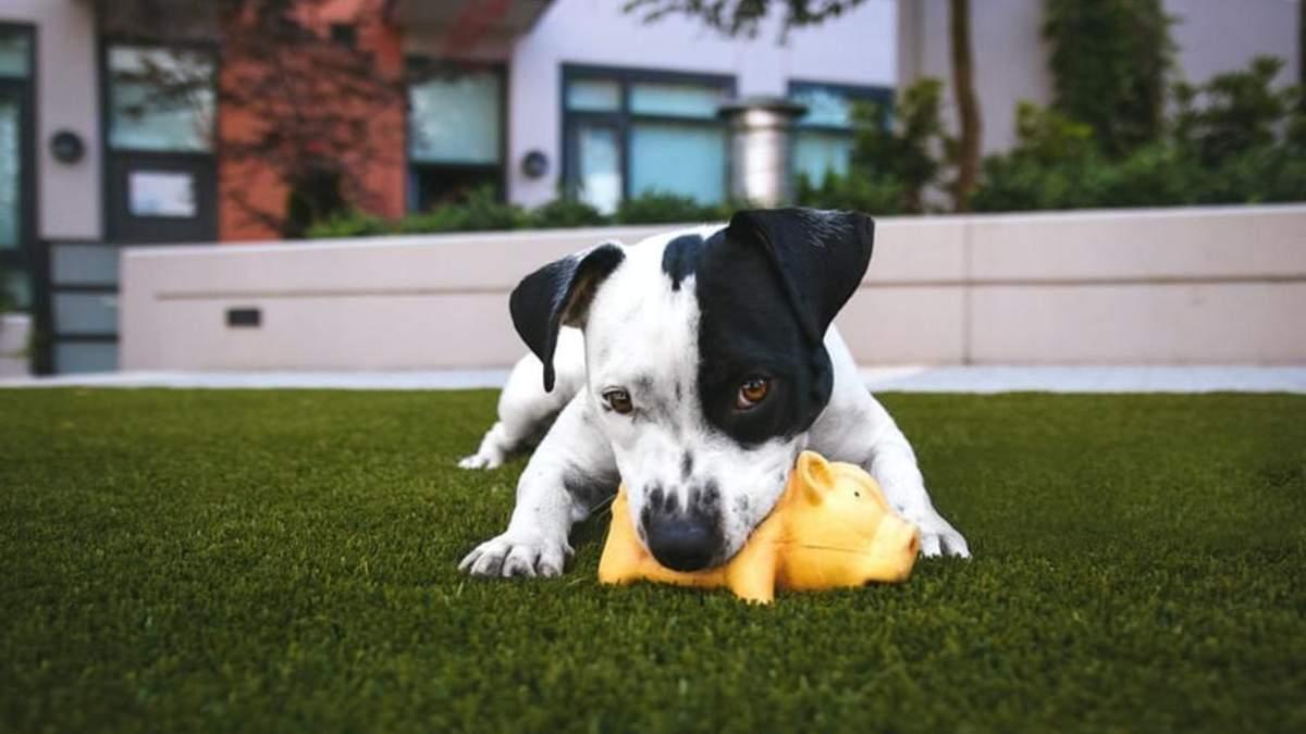 Підбірка корисних і міцних іграшок для собаки: опис і фото