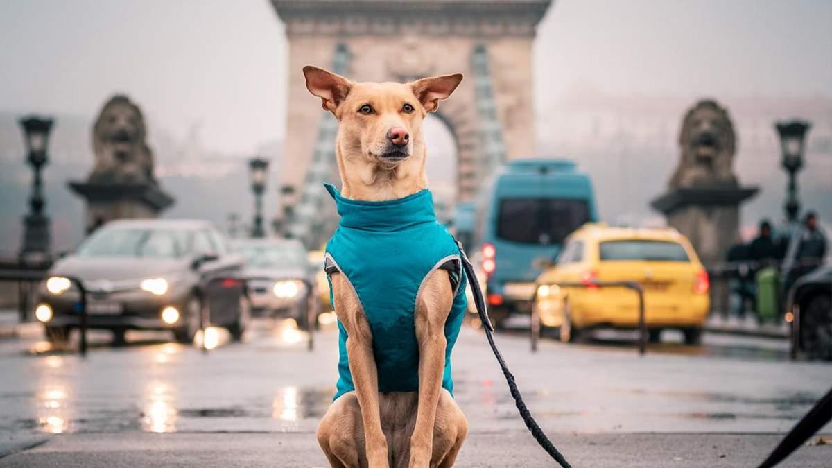Популярна собака-мандрівниця Чапаті підготувала сюрприз для українців