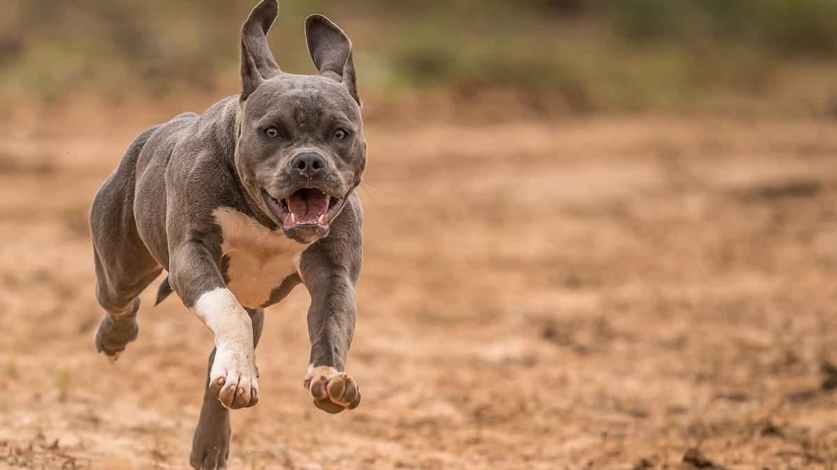 Як захистити собаку від кліщів