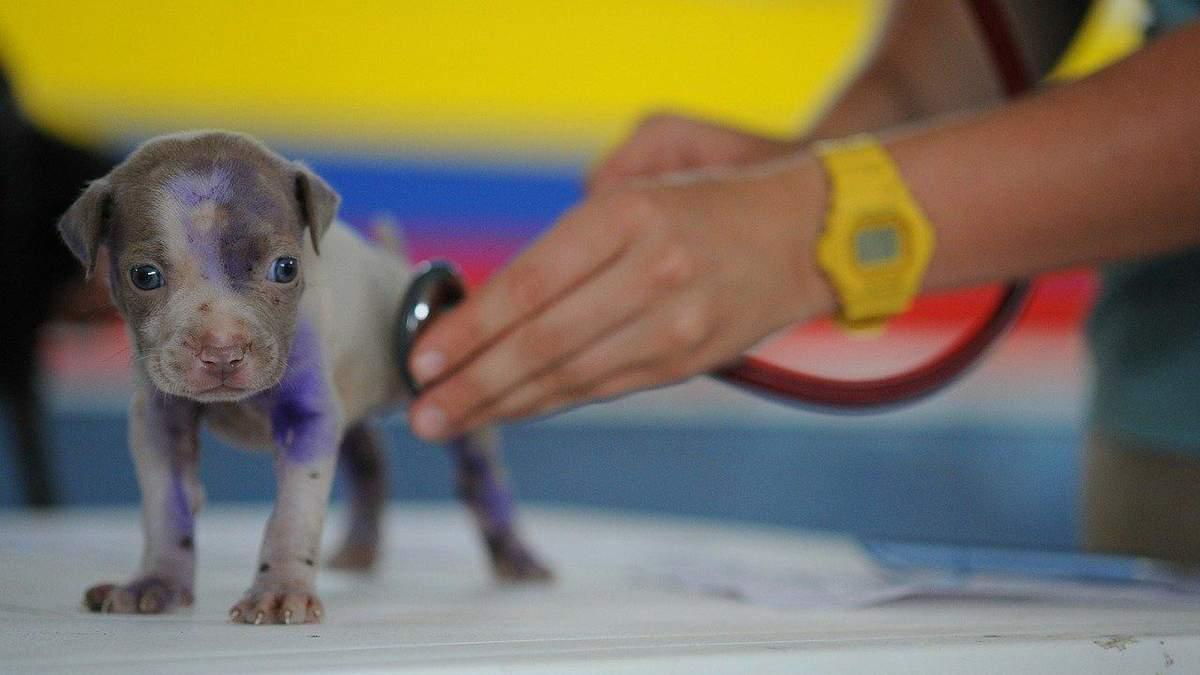 Про що варто спитати ветеринара на прийомі: 5 питань про тварин