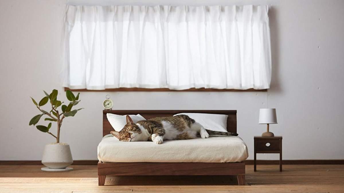 Tateno создали стильные мини-мебель для кошек