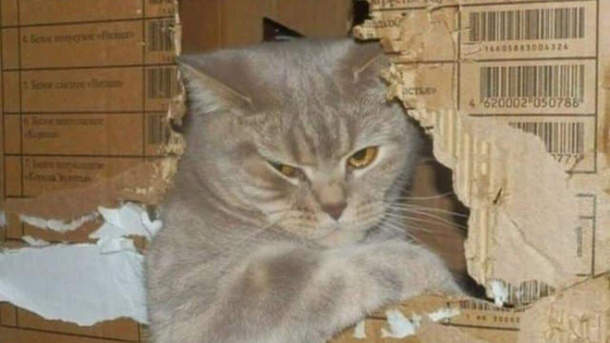 Дуже милі й дуже нахабні коти: у цих фото ви впізнаєте своїх улюбленців