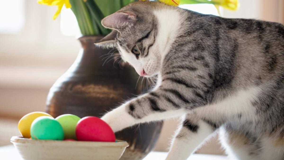 Чи можна давати котам варені, сирі чи смажені яйця