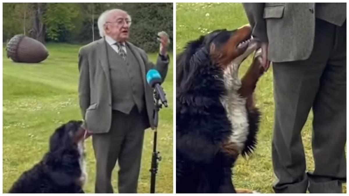 Пес президента Ирландии Майкл Хиггинс мешал ему во время интервью