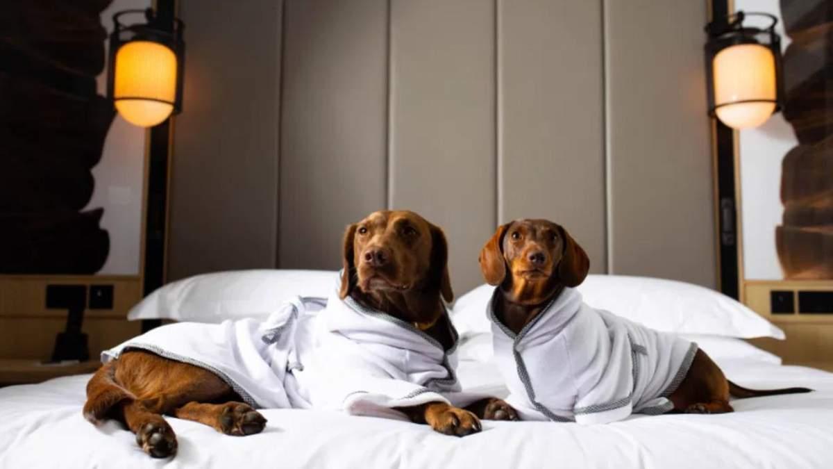 На спа чи в басейн: створили розкішні халати для собак