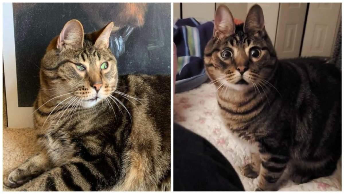 Кіт Арахіс з інвалідністю, який схожий на зайчика: фото