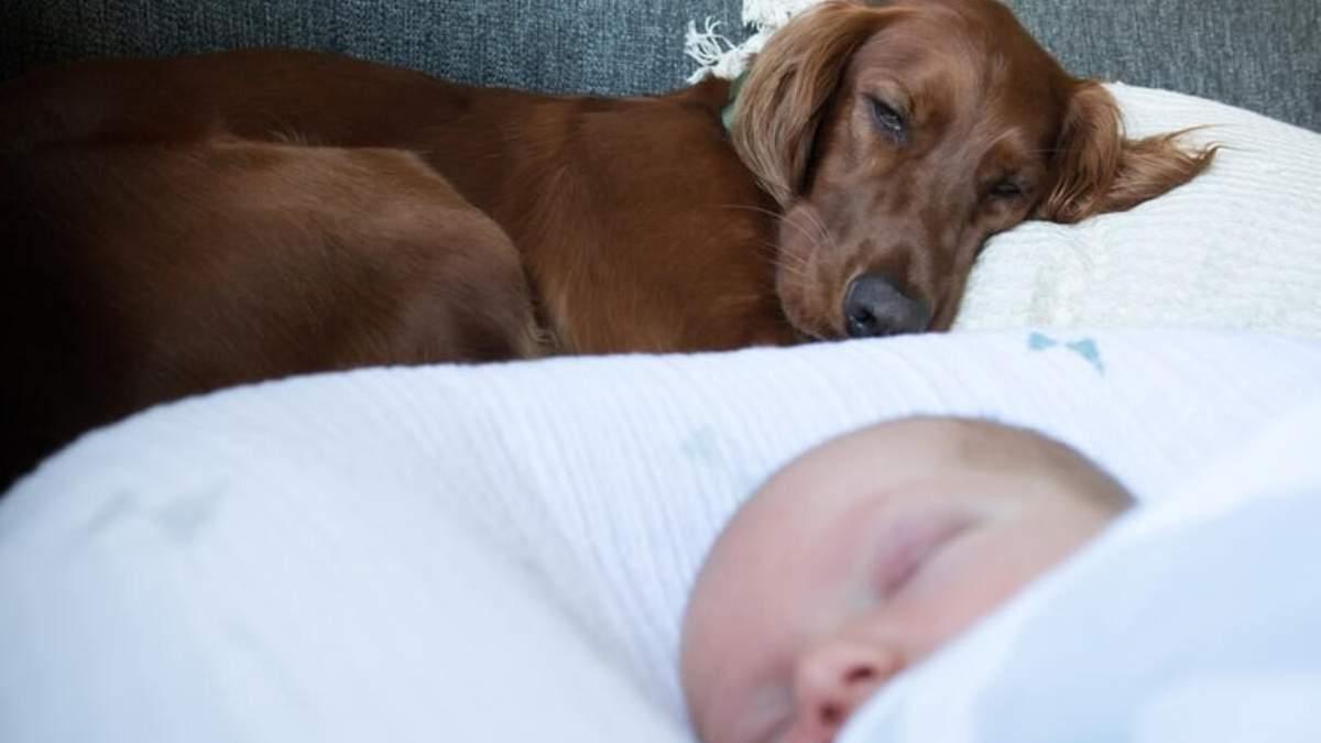 Немовля і кіт чи собака: чи можуть жити разом