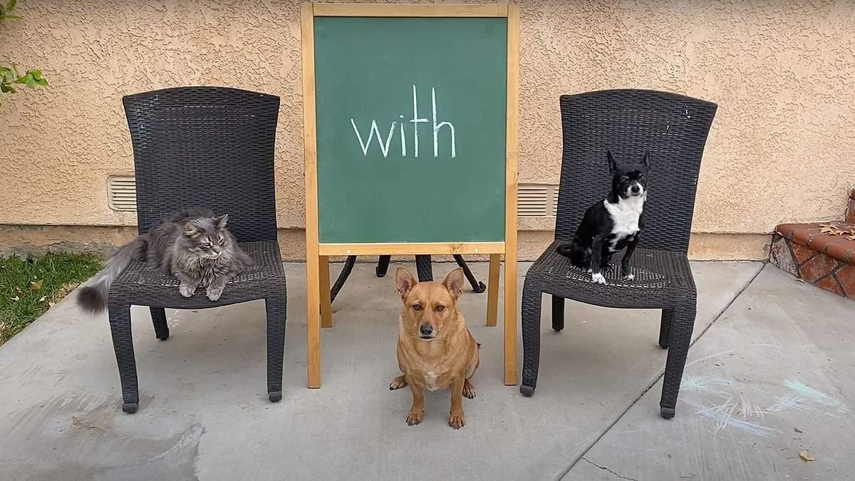 Пес-професор: кумедний собака допомагає вчити дітей онлайн