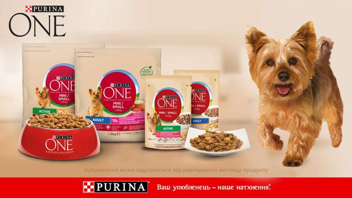 Purina One® Mini/Small: корм, адаптований до потреб собак малих порід