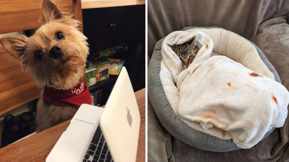 Люди купили своїм собакам та кішкам цікаві речі: фото