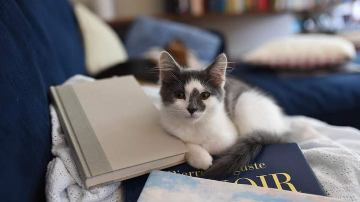 Книги про котів для дітей: добірка літератури