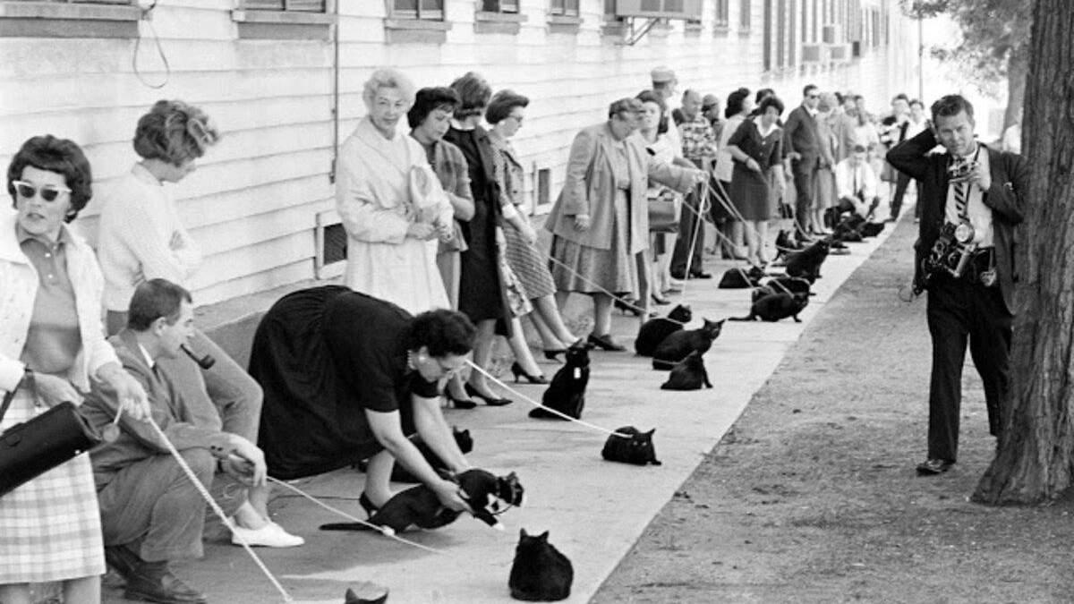 Зловещая очередь из черных котов: история популярного фото