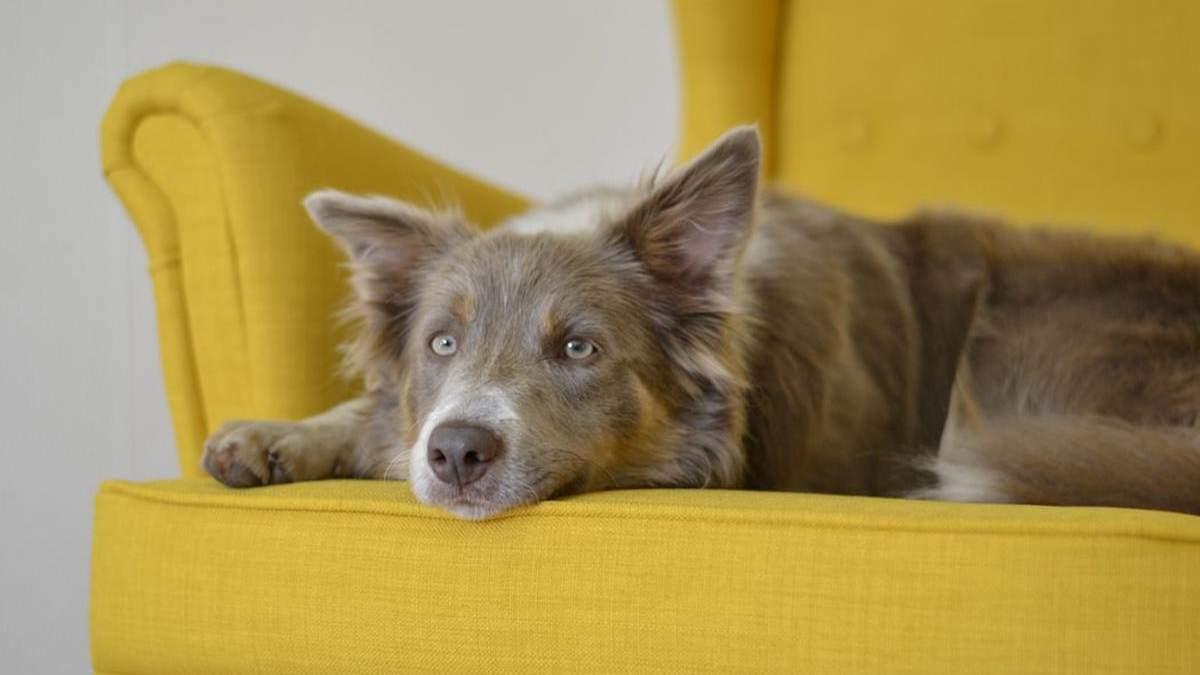 Як привчити собаку триматися подалі від меблів