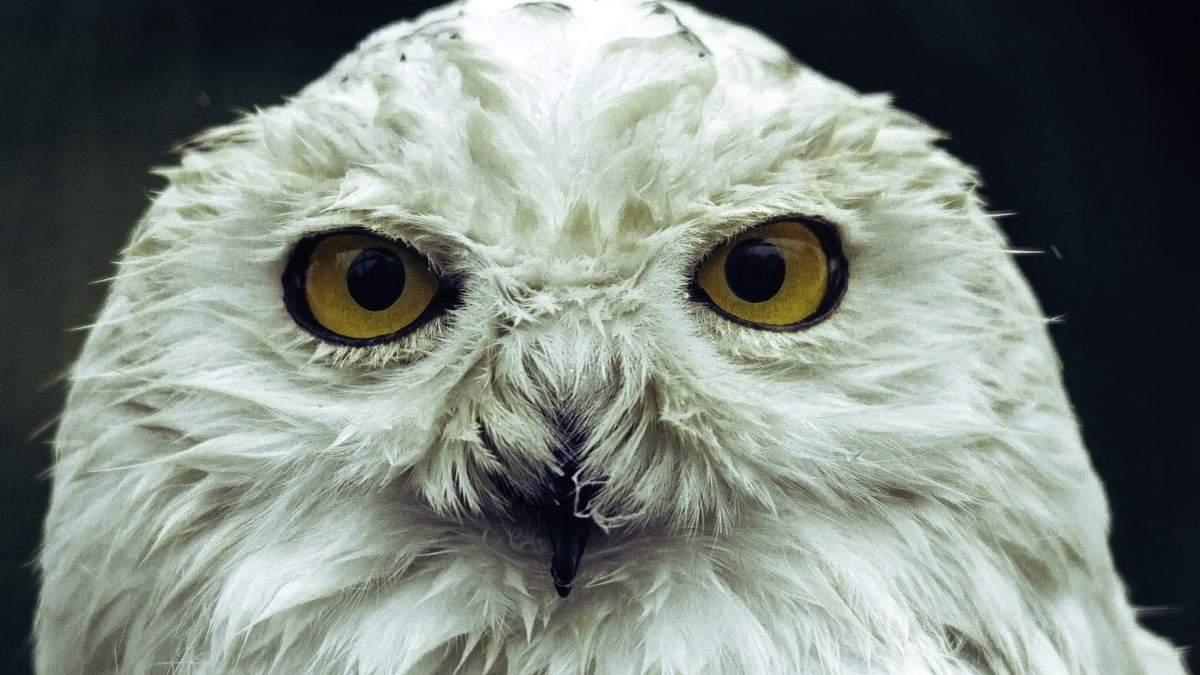 50 чарівних кличок для домашніх тварин з Гаррі Поттера