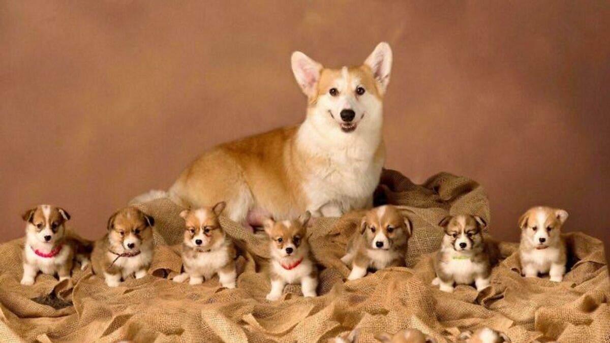 Смішні фото цуценят та собак: мила добірка