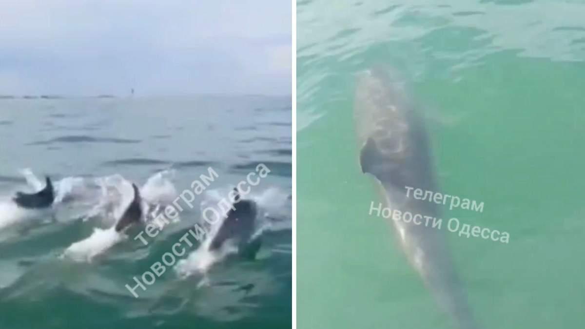 Перегони з дельфінами: під Одесою зняли неймовірне відео