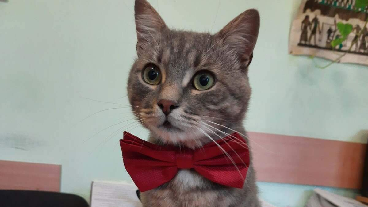 У Чернівцітеплокомуненерго працює кіт з зворушливою історією порятунку