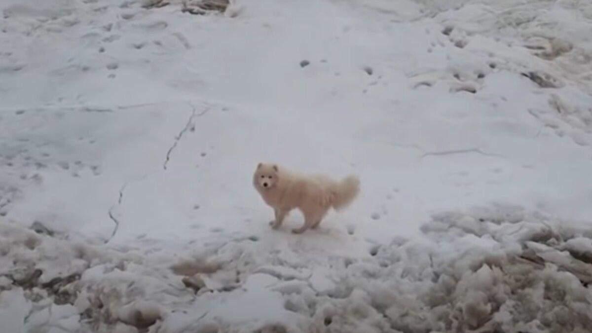 В Арктике моряки спасли собаку с айсберга: как она там оказалась