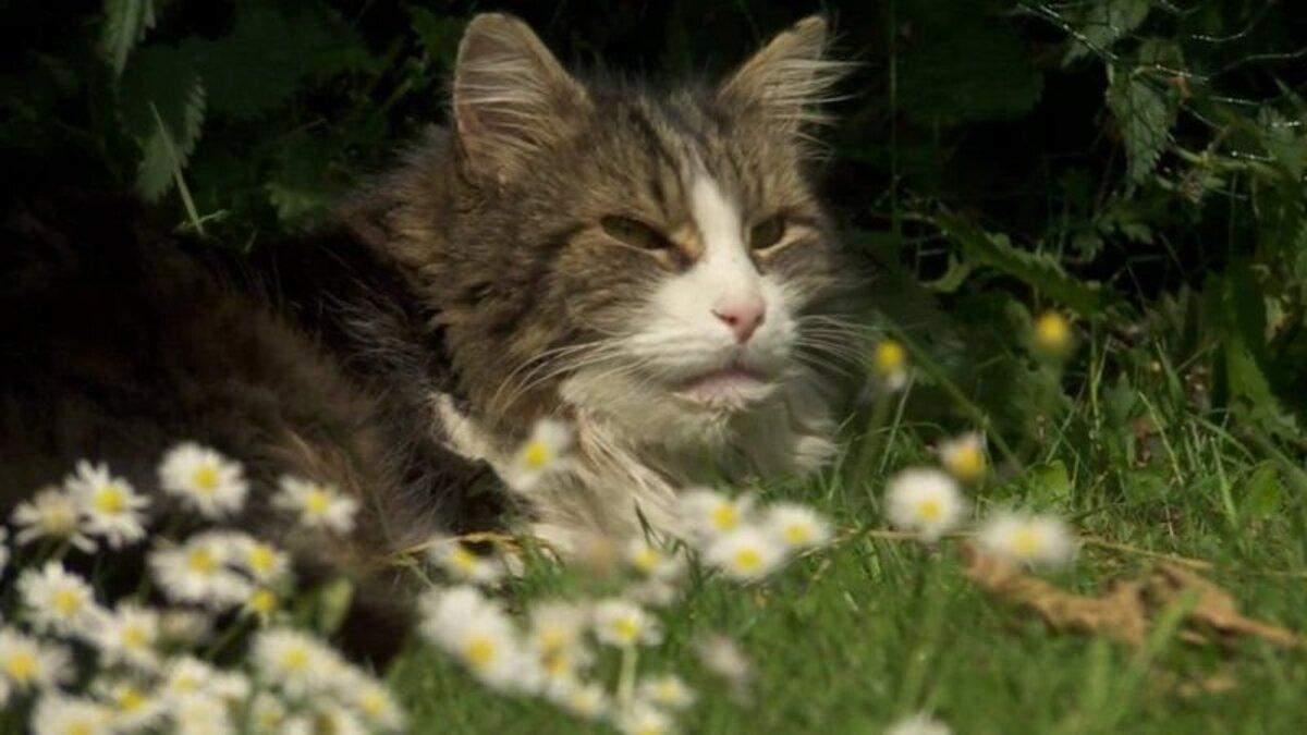 Кіт несподівано повернувся до своєї сім'ї, яка його поховала