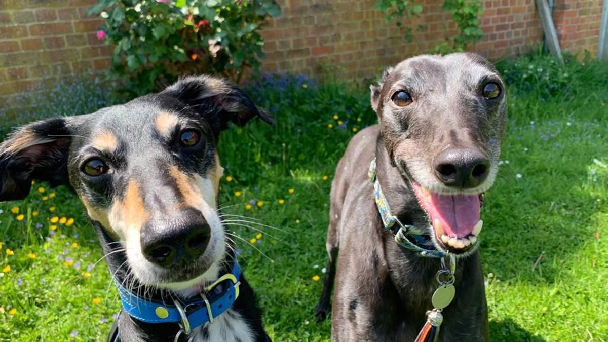 2 собаки в притулку покохали одне одного й тепер шукають дім разом