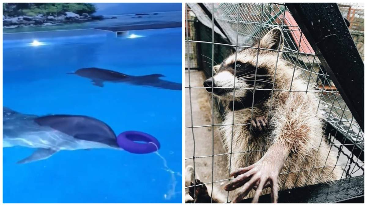 Чому не варто відвідувати дельфінарії та контактні зоопарки
