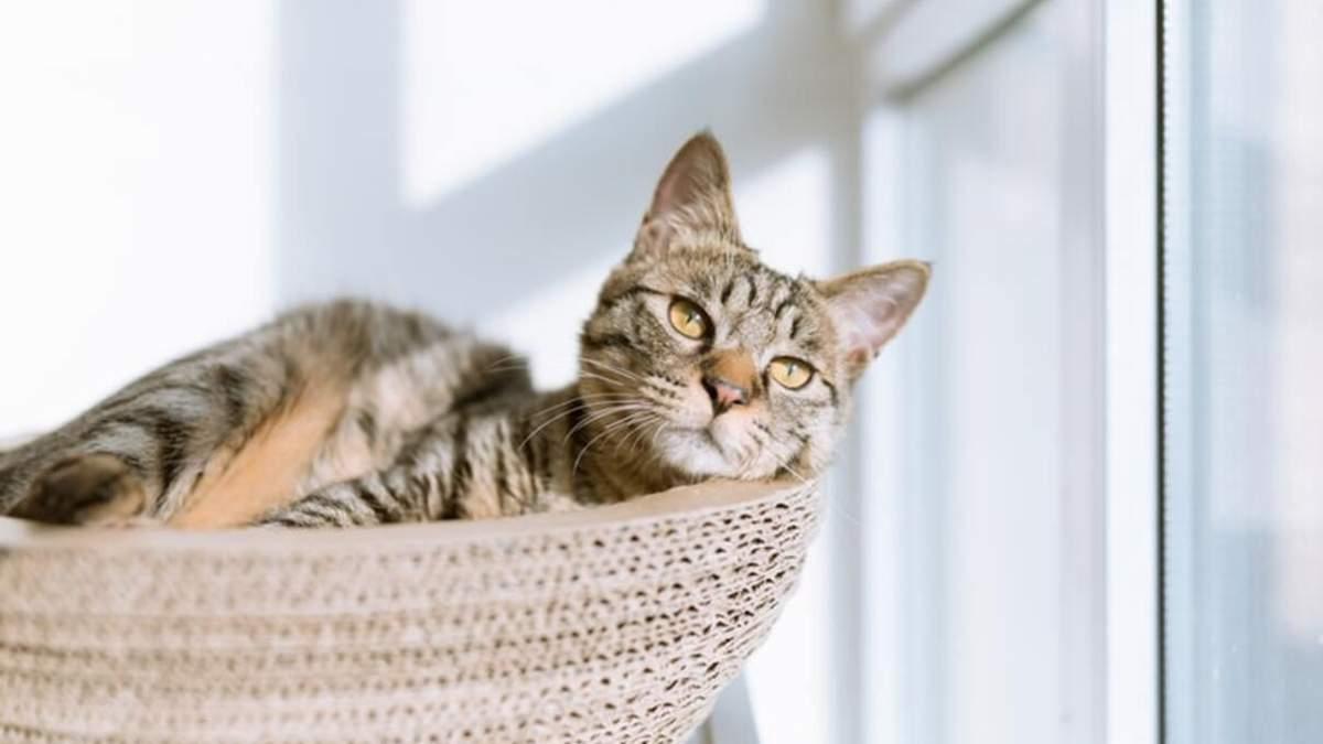Симптомы болезни у котов: описание важнейших