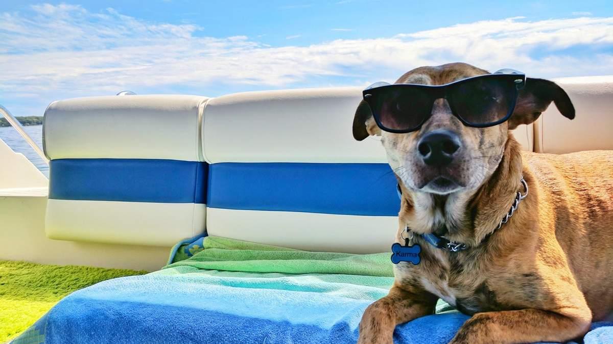 Как помочь собаке в жару: советы кинолога