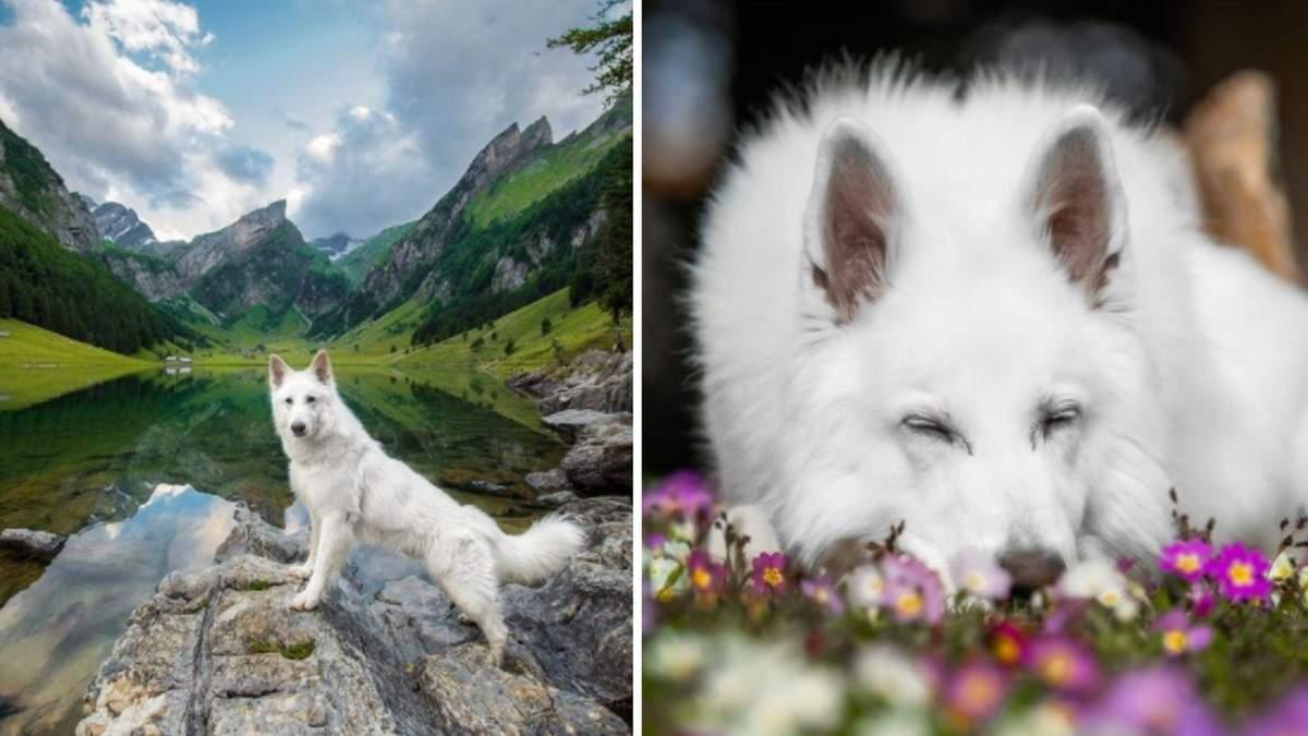 Як пес-мандрівник зі Швейцарії став зіркою соцмереж