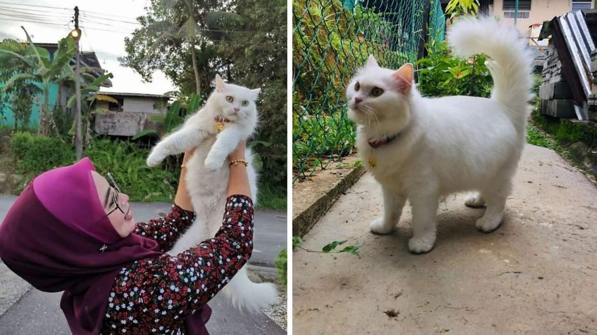 З чудовиська стала красунею: історія порятунку милої кішки з фото