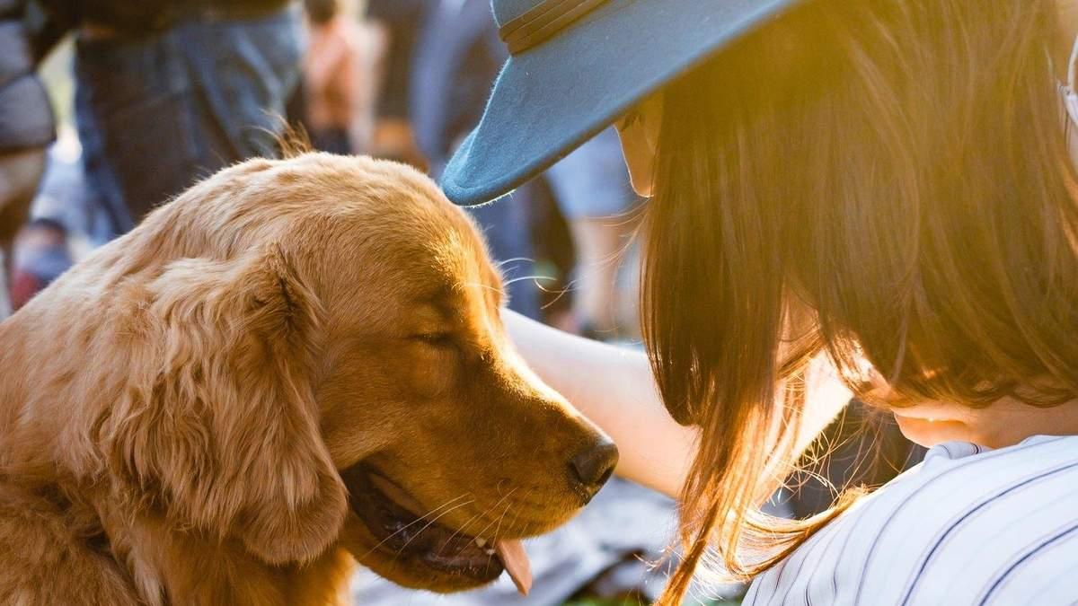 Ще з льодовикового періоду: історія дружби людини та собаки