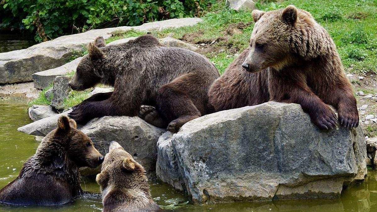 Утримував 5 бурих ведмедів: суд ухвалив рішення конфіскувати тварин