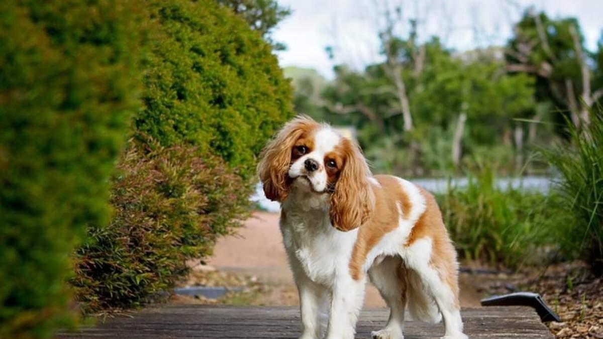 Спокойные породы собак: список и фото