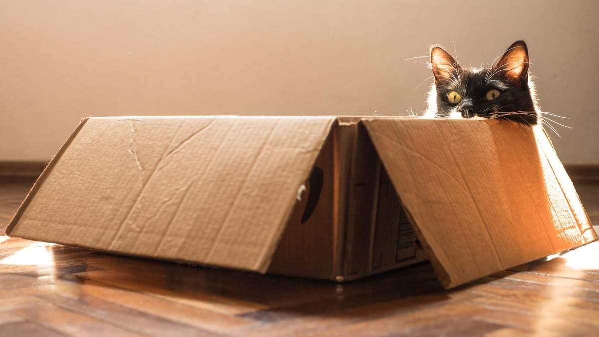 Чому коти так люблять коробки: розкрито секрет