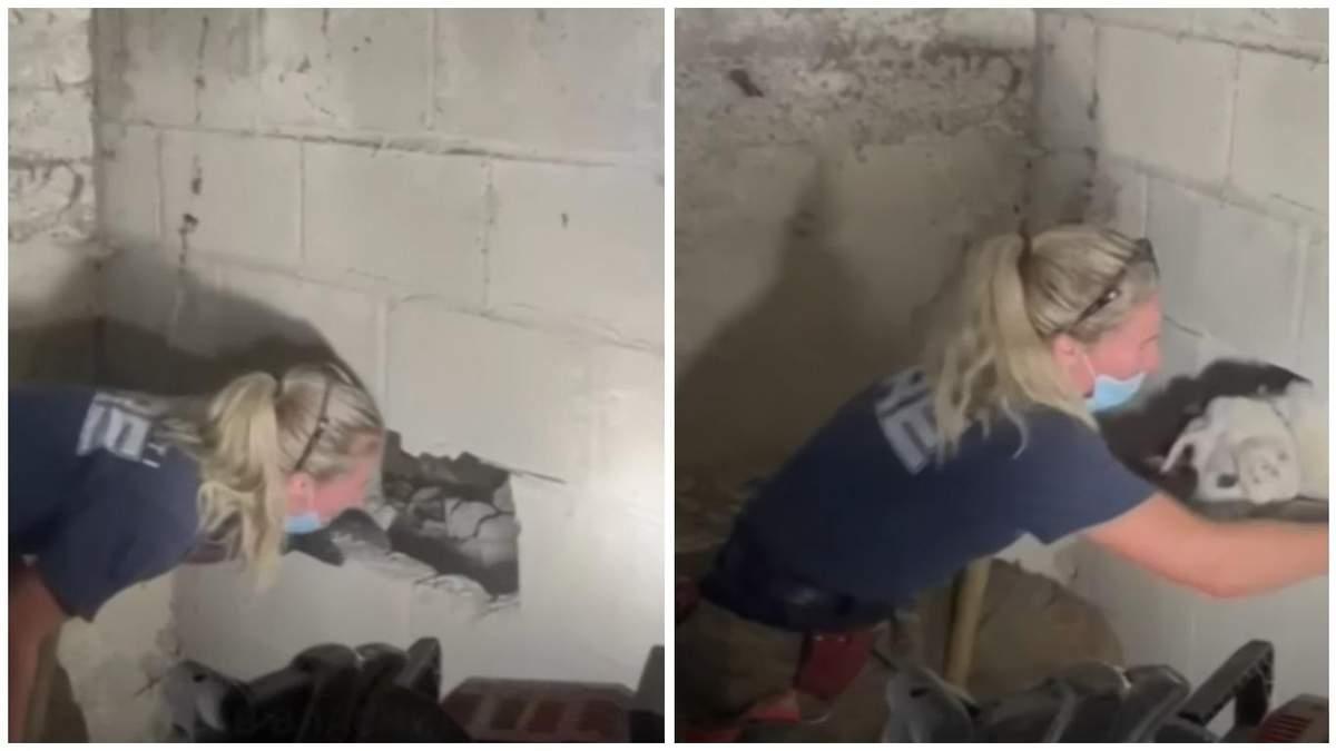 Застряг між стінами: у США дивом врятували собаку – відео - Pets