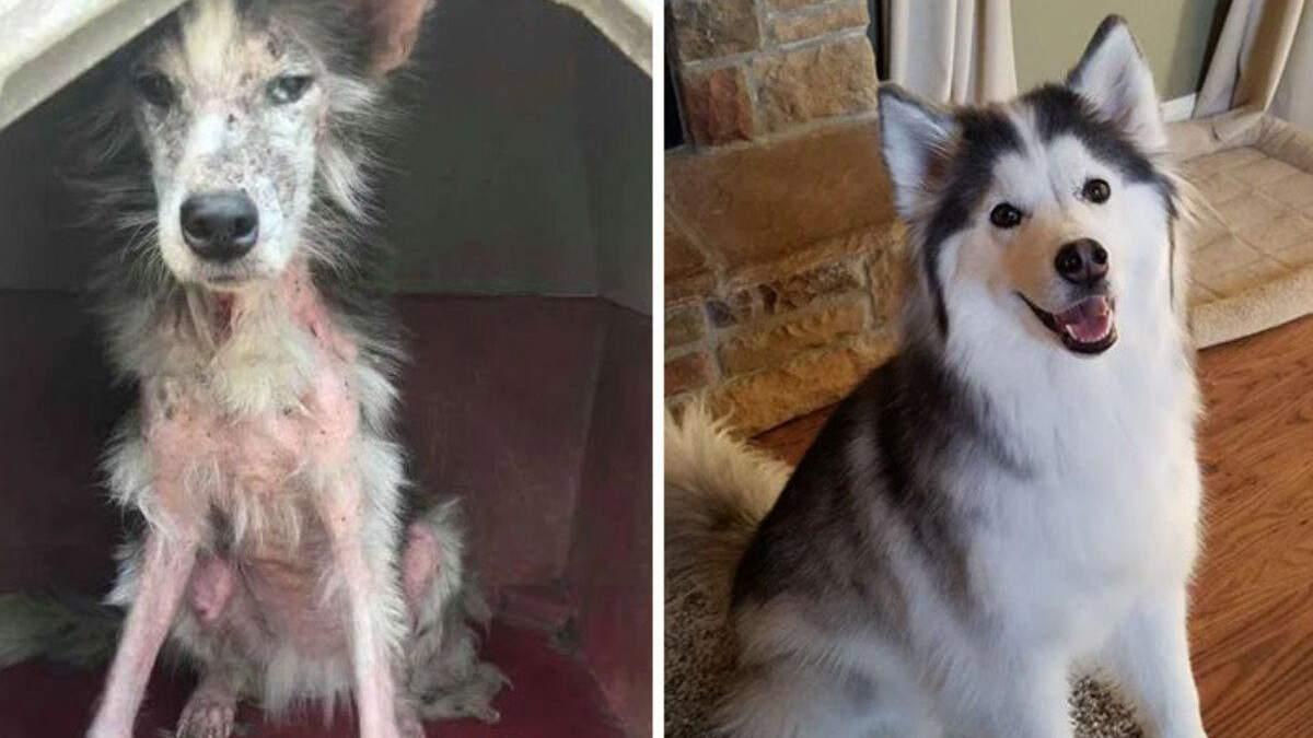 Як змінилися собаки після притулку: фото до та після