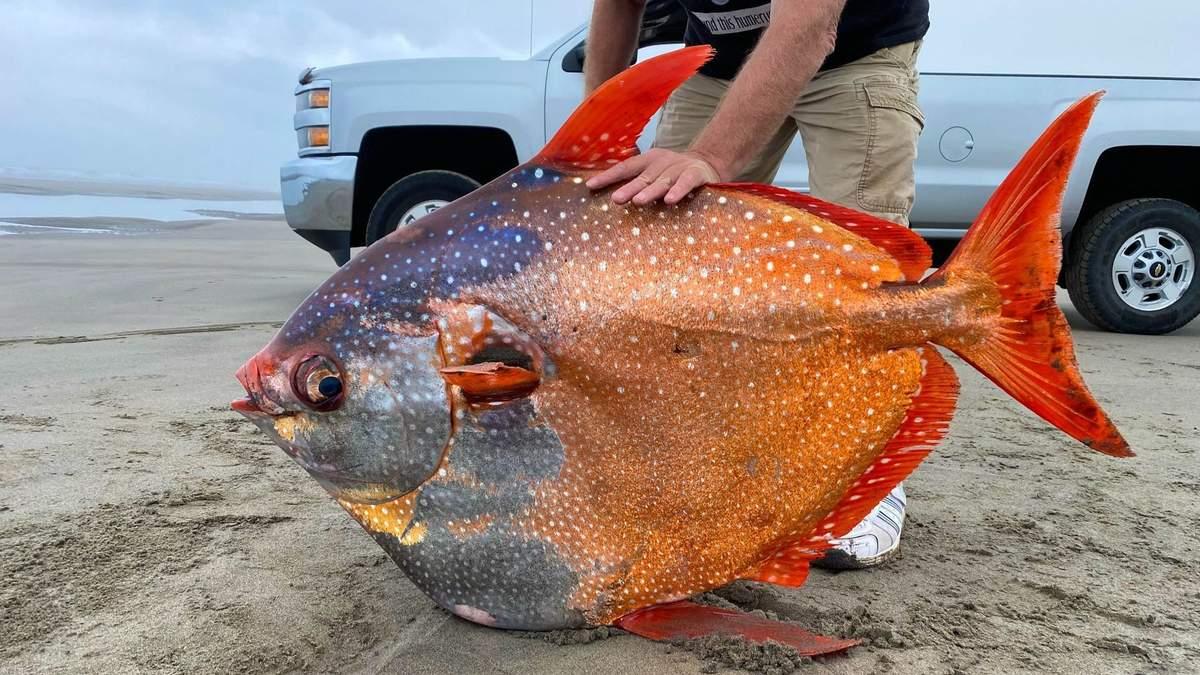 Гигантская лунання рыба, которую вымыло на берег Орегона: фото
