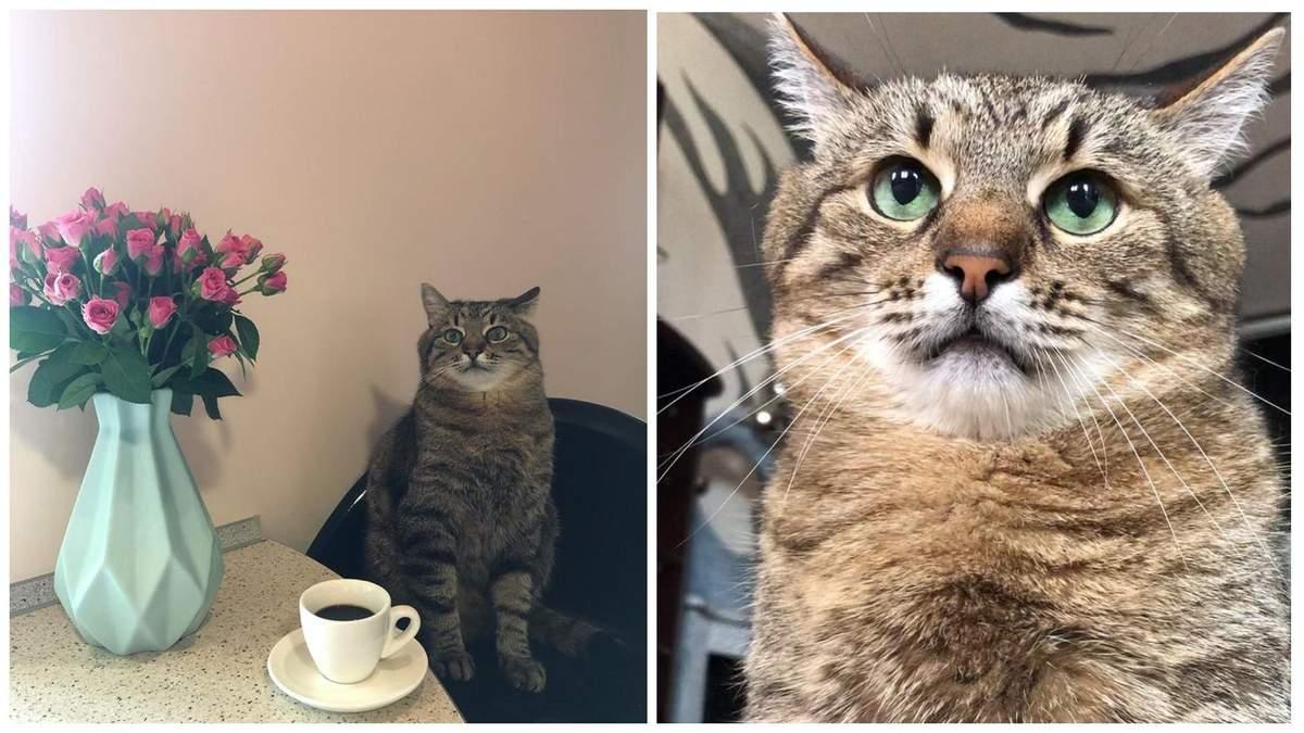Незворушний кіт Степан з Харкова став зіркою тіктока