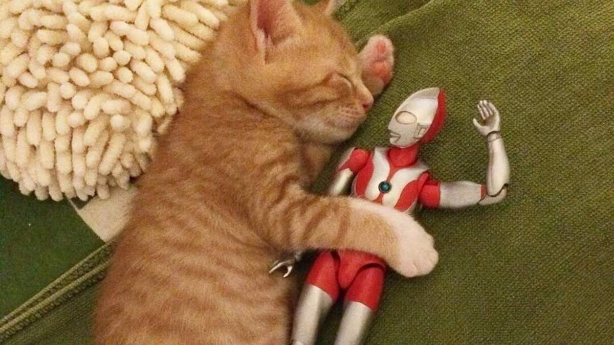 Котенок Кома и игрушка Ультрамен стали звездами инстаграма: фото