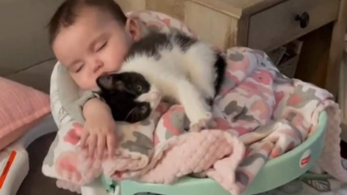Котенок Суши и младенец Ксайомара стали лучшими друзьями: видео