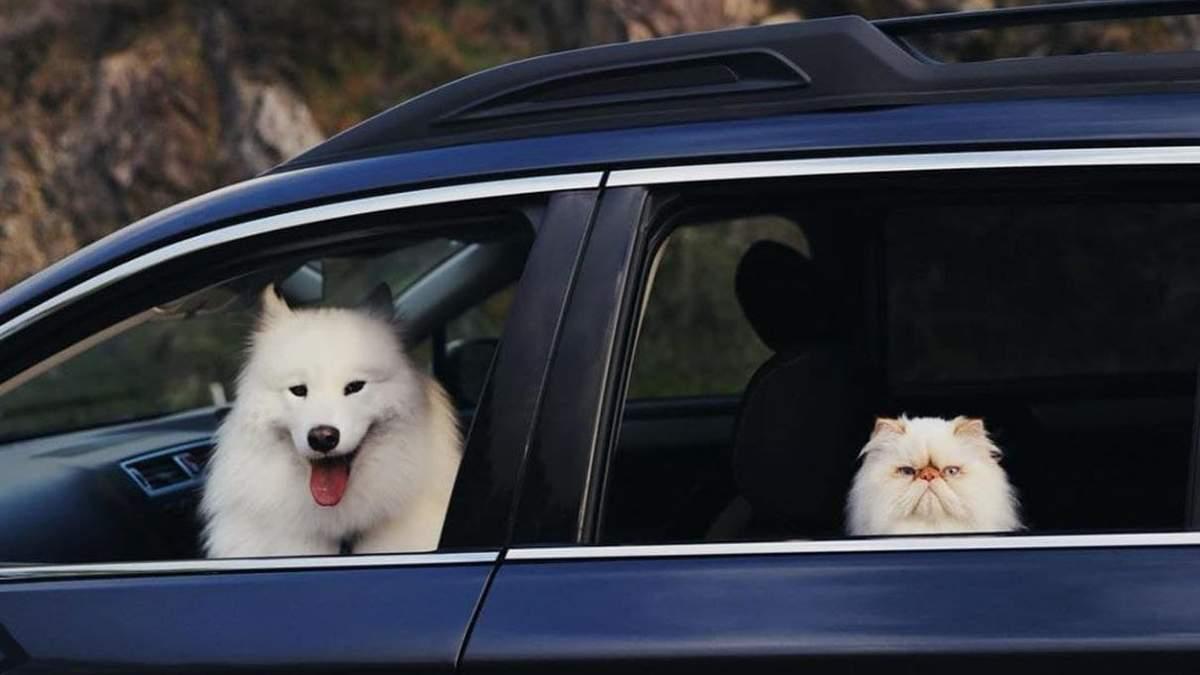 Улыбающийся пес Каспер и мрачный кот Ромео стали друзьями: фото