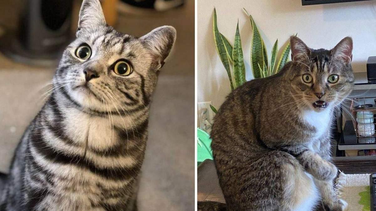 Актори без Оскара: неперевершені фото собак і котів