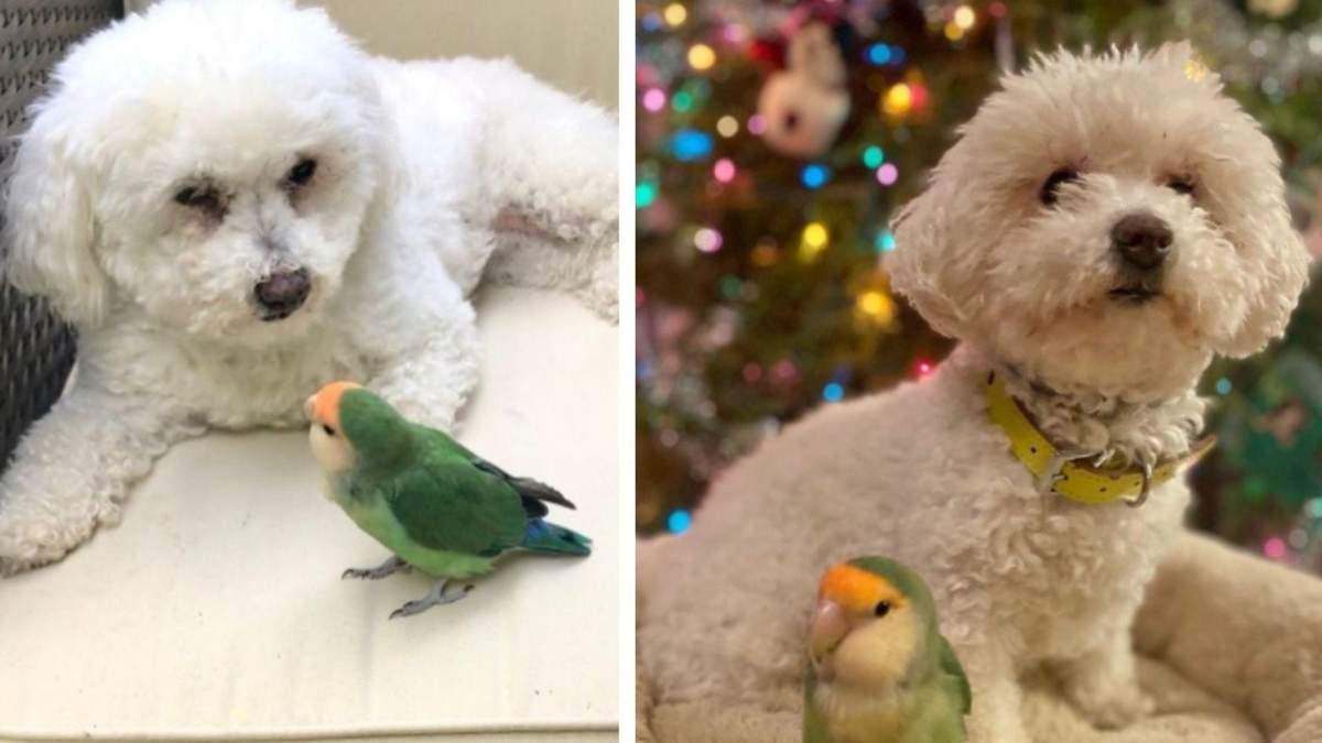 Cобака і папуга стали кращими друзями: фото