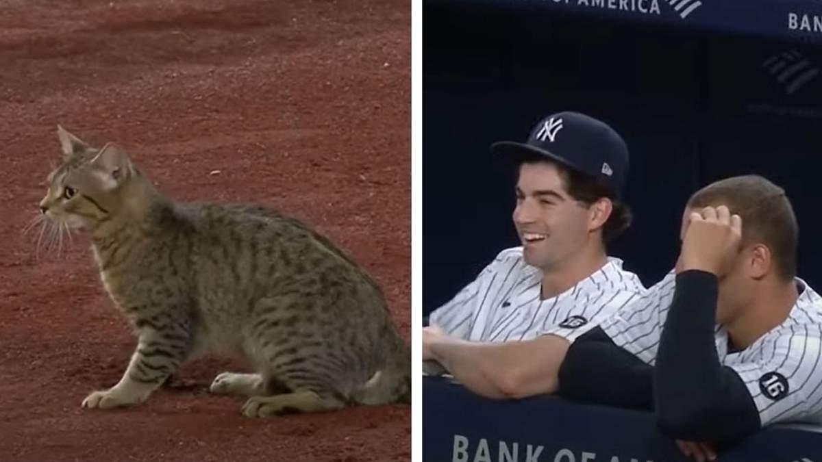 Кіт вибіг на поле й зупинив бейсбольний матч: кумедне відео