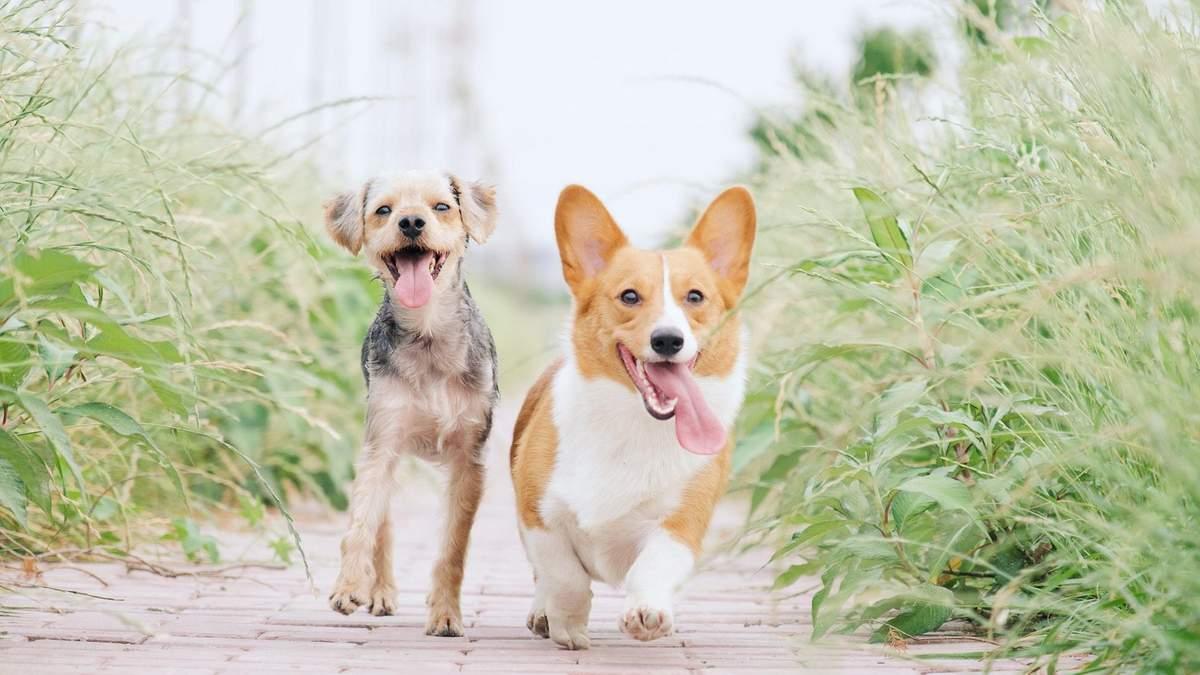 Перший рік життя собаки: що важливо знати кожному власнику