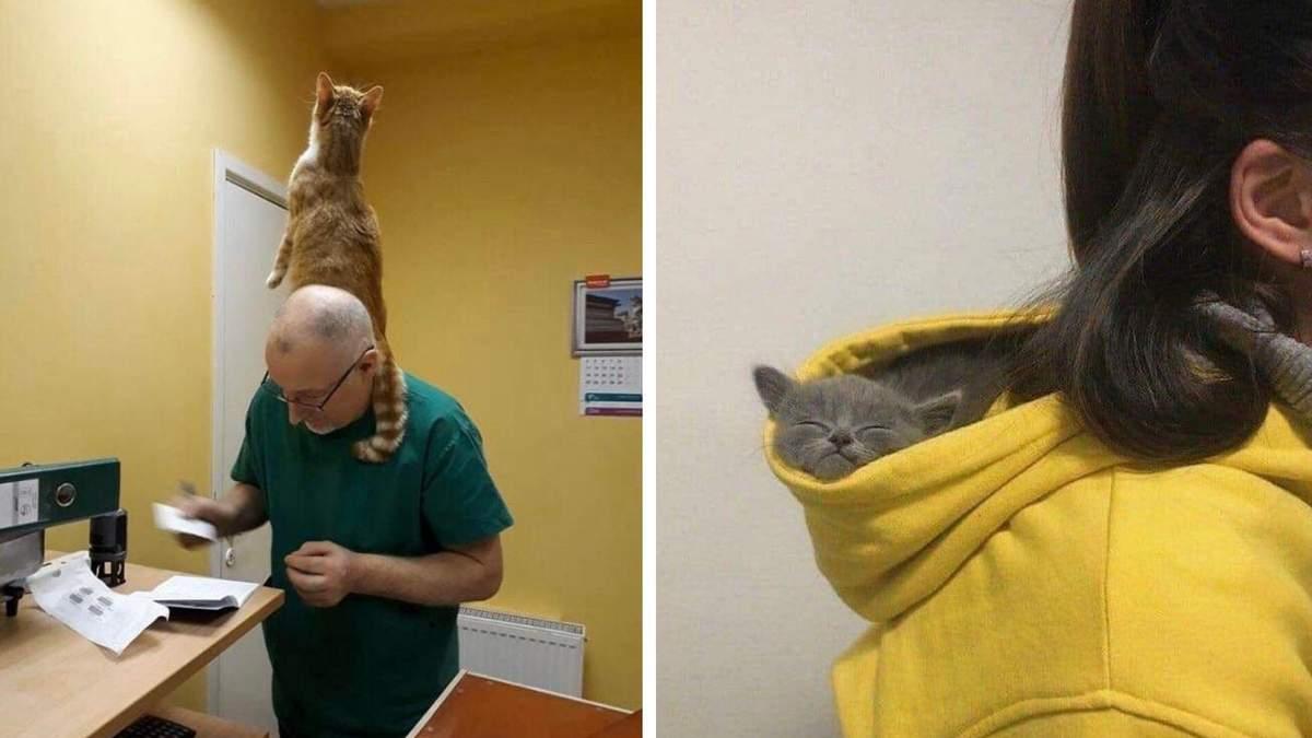 Виховали своїх господарів: 10 смішних фото нахабних котиків