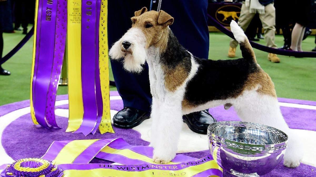 Эти породы собак чаще всего выигрывают золото на Олимпийских играх - Pets