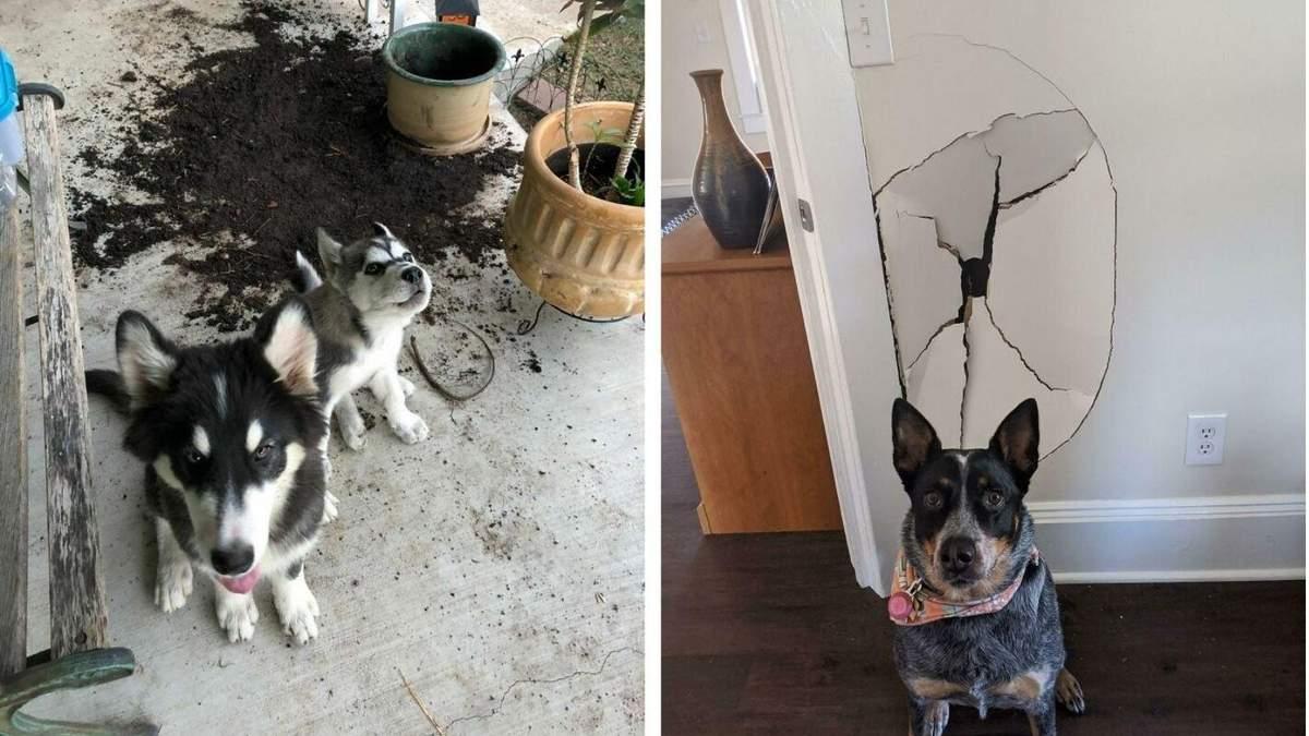 Погані хлопчики: фото собак, які щойно вчинили злочин
