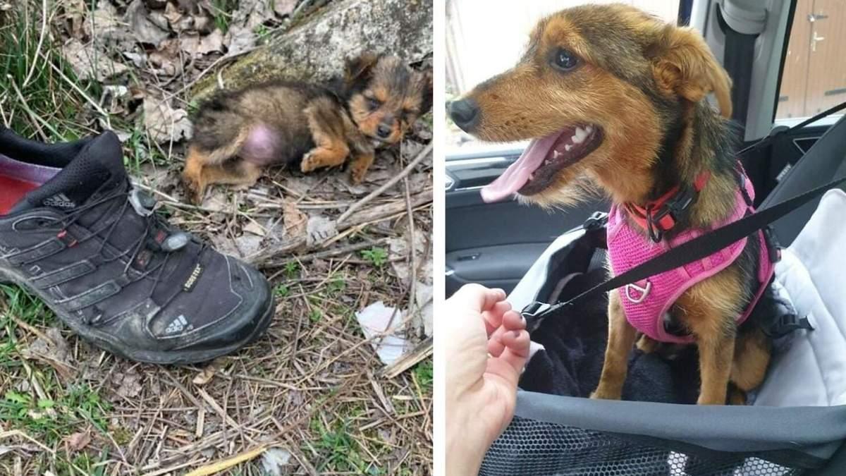 Цуценя жило в покинутому черевику: чим закінчилася щемлива історія  – фото - Pets