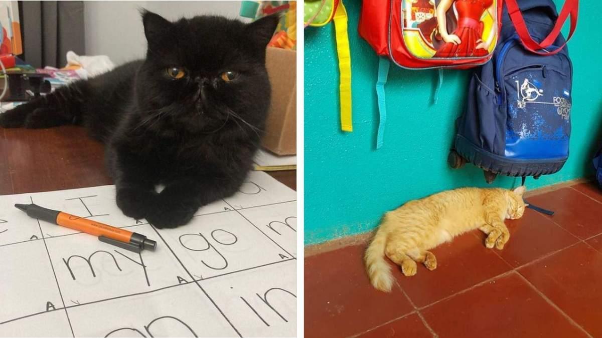 Ці коти вже зібралися до школи: кумедні фото улюбленців, які хочуть вчитися - Pets
