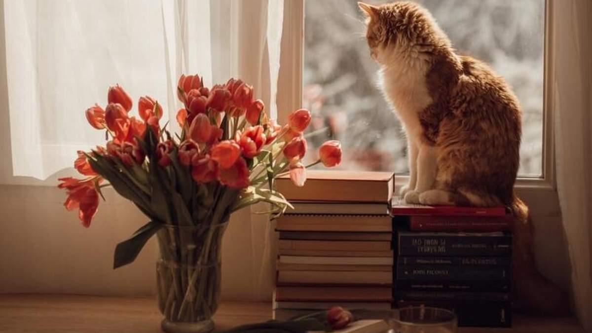 Почему коты любят наблюдать за всем с высоты - Pets